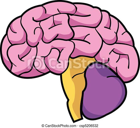 cerveau - csp5206532