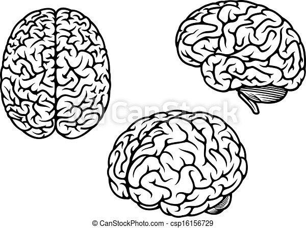 cerveau, trois, humain, avions - csp16156729
