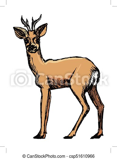 Cervo capriolo animale foresta schizzo immagine for Capriolo animale