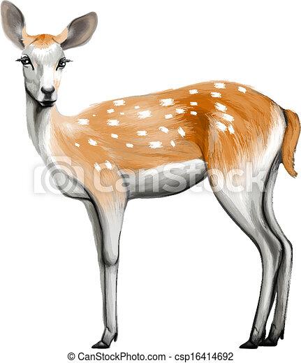 cervo, isolato - csp16414692