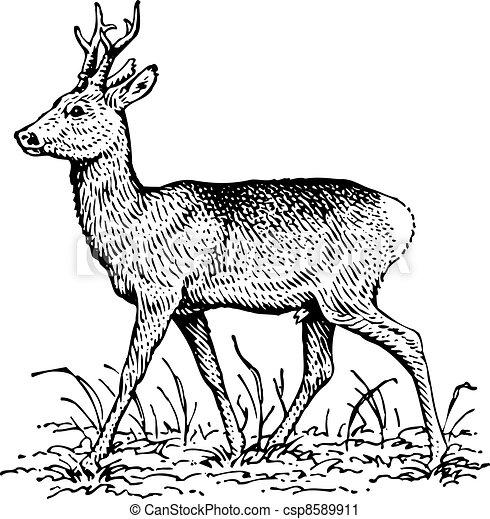cervo - csp8589911