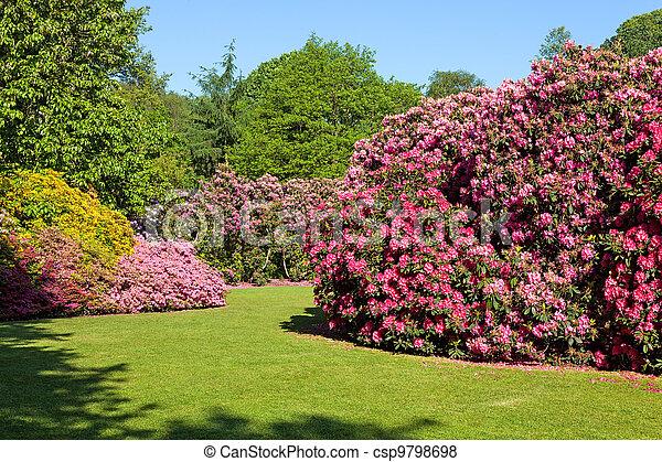 Cespugli estate rododendro giardino sole bello azalea for Cespugli giardino
