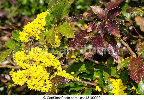 Fiori Gialli A Cespuglio.Cespuglio Fiori Giallo Foto Flowers Studio Cespuglio Giallo