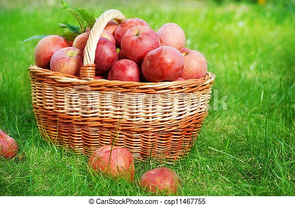 Manzanas orgánicas frescas en la canasta - csp11467755