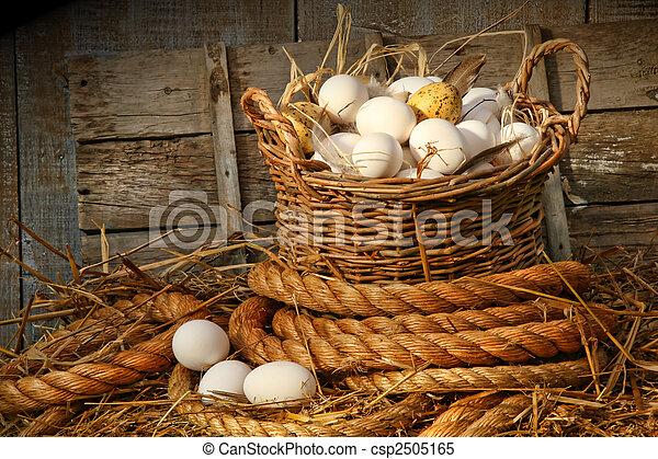 Una canasta de huevos con paja - csp2505165