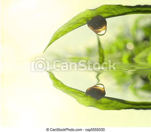 chá, conceito, folha, verde, foto - csp5555030
