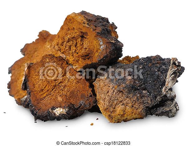 Chaga (Inonotus obliquus) - medicinal birch fungus - csp18122833