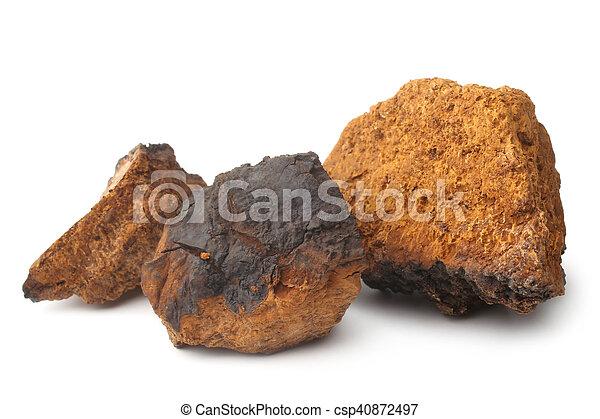Chaga mushroom (Inonotus obliquus) - csp40872497