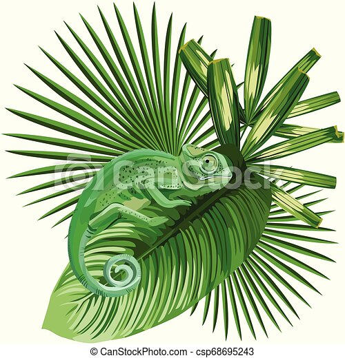 Composition Vector Lizard Chameleon On The Tropical Leaves White Background Canstock Tropical leaves free background free photo. https www canstockphoto com chameleon on the tropical leaves white 68695243 html