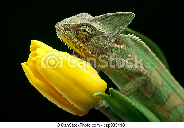 Chameleon - csp3354301