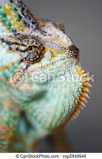 chameleon - csp2849948