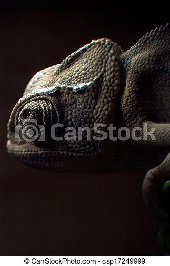 Chameleon - csp17249999