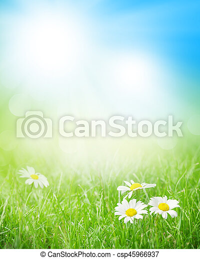 Chamomile flowers on grass field - csp45966937
