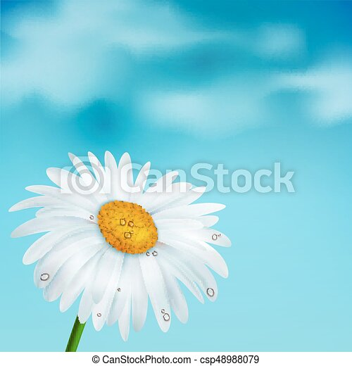 Chamomile on a blue sky background - csp48988079