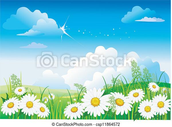 Chamomile on blue sky - csp11864572