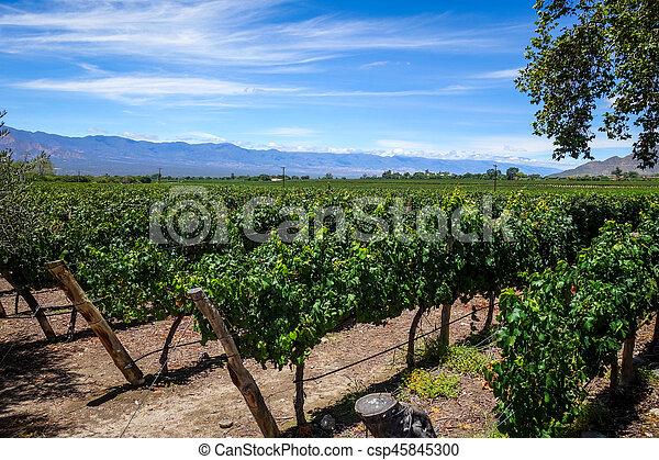 Champ De Vigne champ, argentine, vigne, cafayate. champ, vigne, cafayate, salta