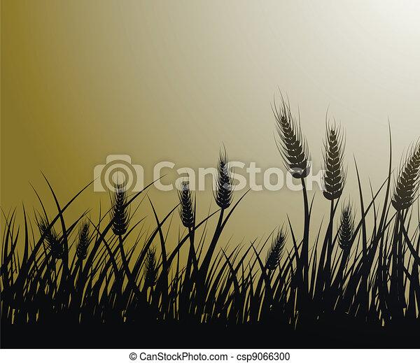 champ, blé - csp9066300