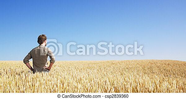 champ, blé, jeune homme - csp2839360