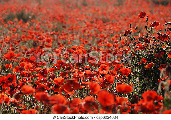 Champ, coquelicots. Monet, aimer, oh, claude, coquelicots,... photo ...