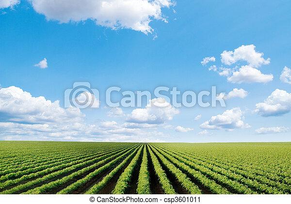 champ, cultivé - csp3601011