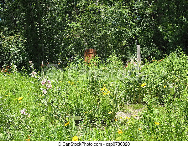 champ, fleurs - csp0730320