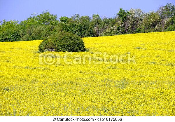 champ fleurs jaune luzerne spring champ jaune vert images de stock rechercher des. Black Bedroom Furniture Sets. Home Design Ideas
