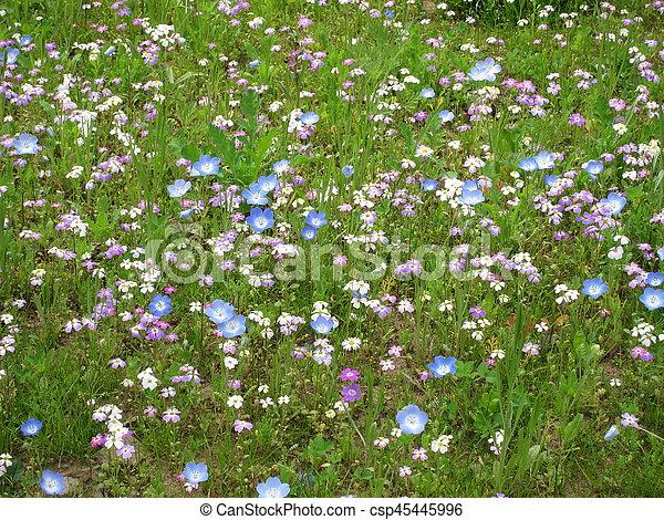 champ, fleurs - csp45445996