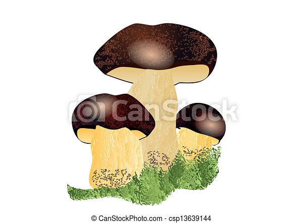 champignon, boletus - csp13639144