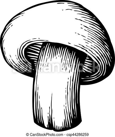 champignon mushroom - vintage engraved vector illustration (hand drawn style) - csp44286259