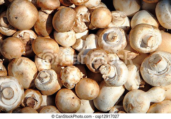 champignons mushrooms - csp12917027