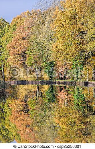 channel et autumn forest - csp25250801