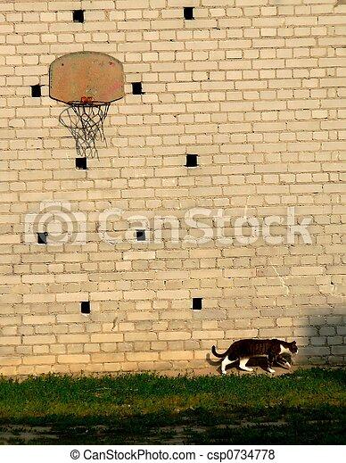 chasser souris basket ball chasser mur chat devant images rechercher photographies. Black Bedroom Furniture Sets. Home Design Ideas