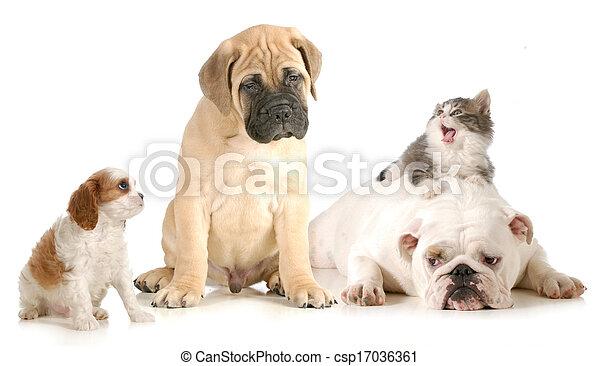 chat, chien, baston - csp17036361