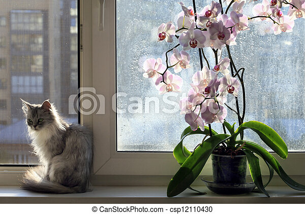 orchidee chat