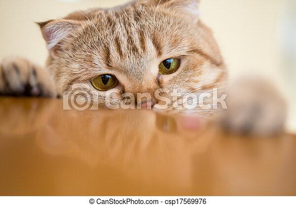 chat, quelque chose, table, essayer, voler, cuisine - csp17569976