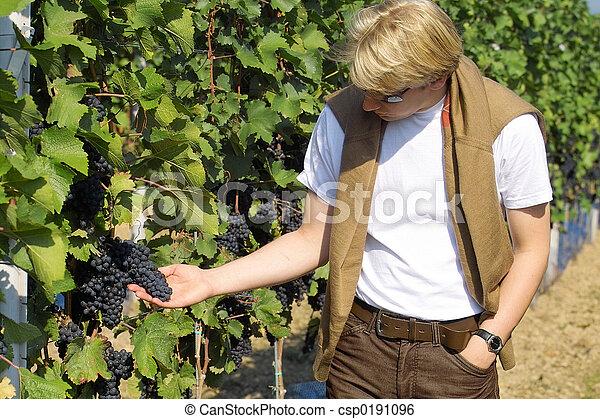 Checking the grapes - csp0191096