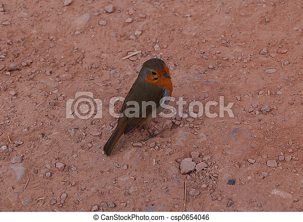cheeky robin 1 - csp0654046