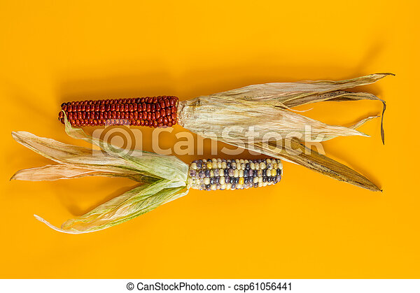 Cheerful and Colorful dried Indian Corn on yellow surface - csp61056441