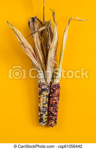 Cheerful and Colorful dried Indian Corn on yellow surface - csp61056442
