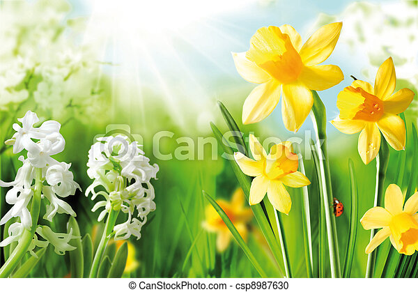Cheerful Spring Bulbs - csp8987630