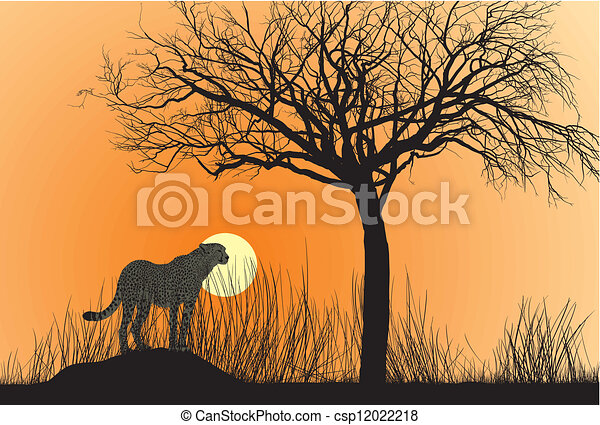 Cheetah And Sunset - csp12022218