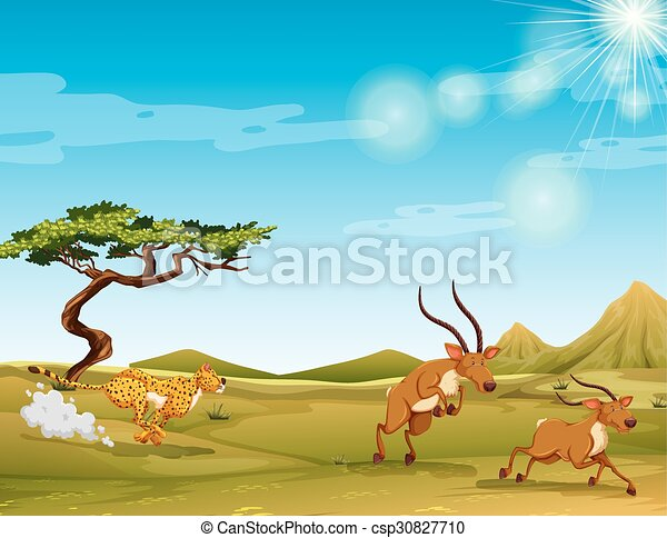 cheetah chasing deers in the savanna illustration vector