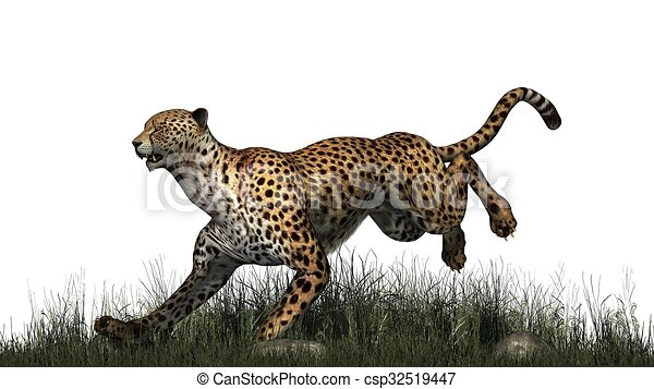 Line Drawing Grass : Cheetah in grass drawing search clip art illustrations and eps