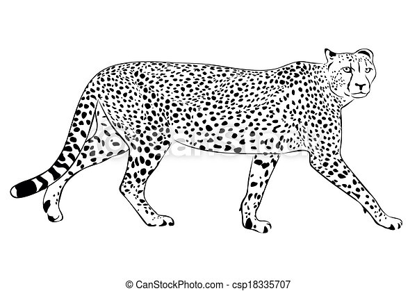 cheetah - csp18335707
