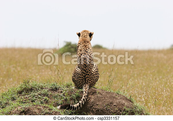 Cheetah with cub resting in the gras with sunlight - csp3331157
