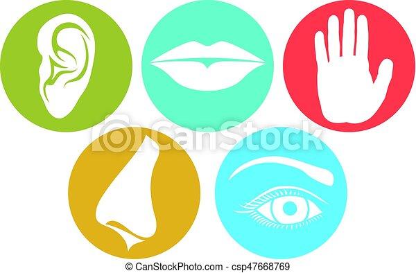 cheiro, (nose, gosto, lábios, hand), toque, senses:, 5, vista, orelha, ouvindo, olho - csp47668769