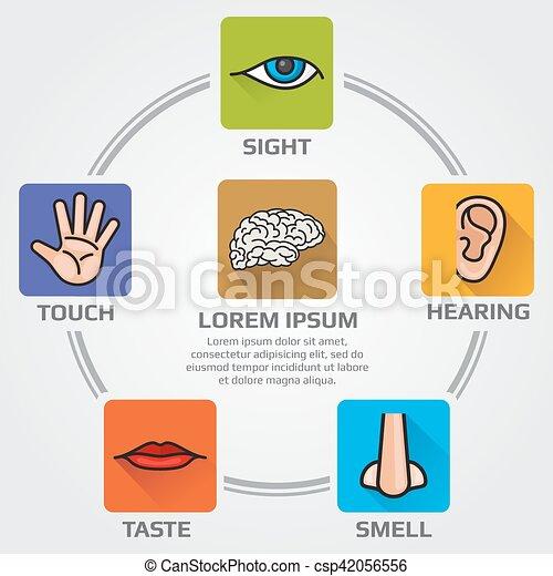cheiro, sentidos, ícones, mão, gosto, sensório, vista, vetorial, cinco, human, infographics, boca, nariz, orelha, ouvindo, olho - csp42056556