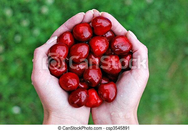 Cherries and hand 1 - csp3545891