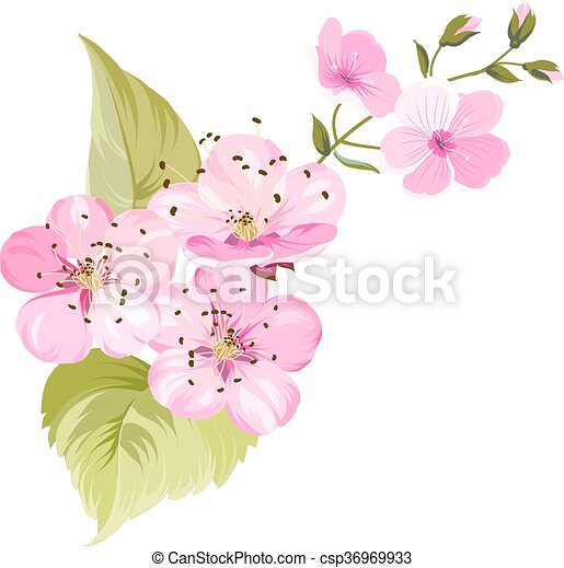 Cherry blossom. Blossom branch of pink sakura flowers. Japanese cherry tree. Beautiful pink cherry blossom flowers. Sacura isolated over white.Greeting or invitation card. Vector illustration - csp36969933