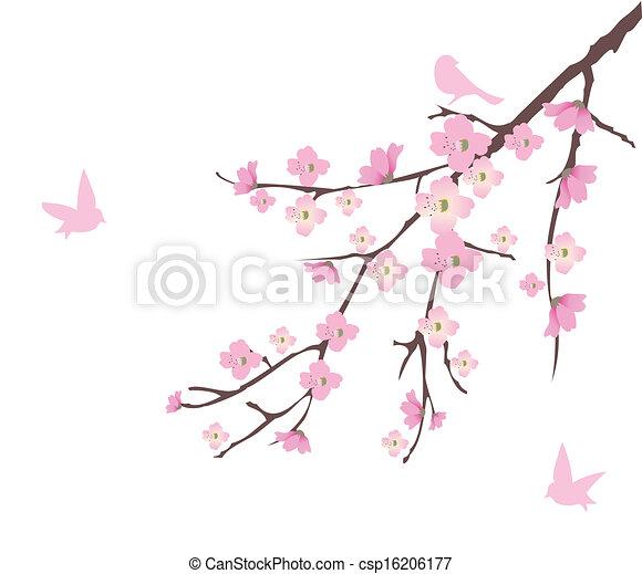 Cherry Blossom - csp16206177